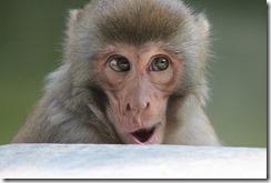 monkey gérand de fond battu par Cass Business School